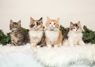 The Four Pie Kittens 4944