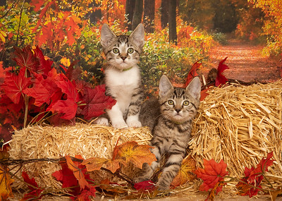 Kittens 5953