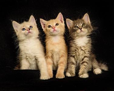 kittens NHS 7526