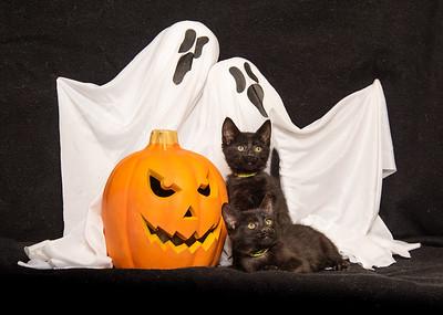 Black kittens at Halloween