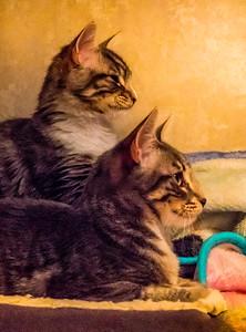 Jasper Kitties