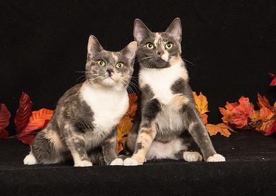Tiffany and Toni 4719