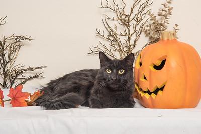 Black Cat and Pumpkin 4845
