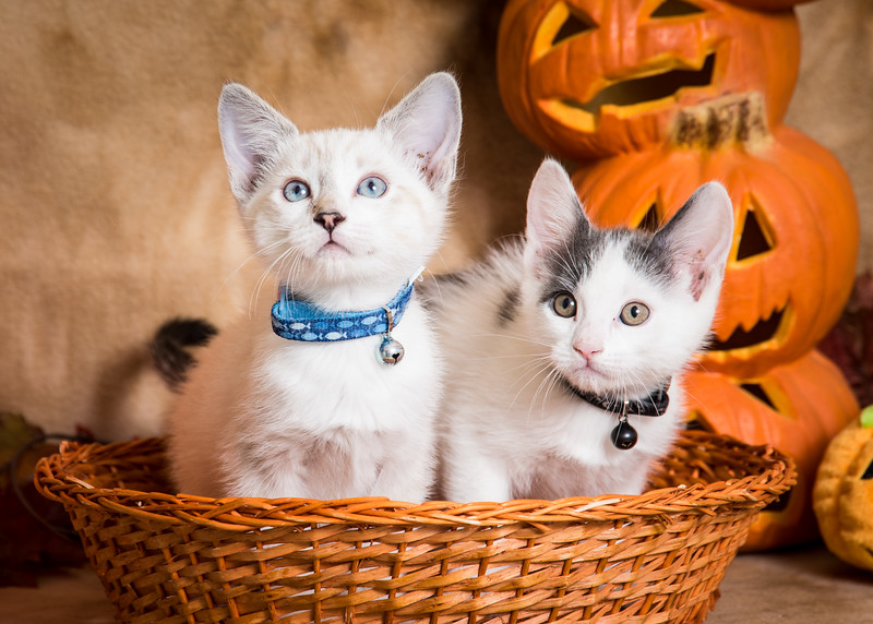 Jinx and Junior in a basket