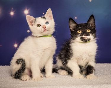 kittens Mary-Poppins 9288