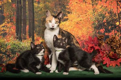 Acacia and Kittens