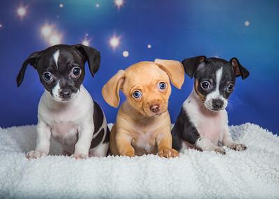 puppies 3861