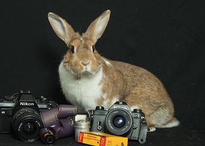 Bunny Mauve 2713