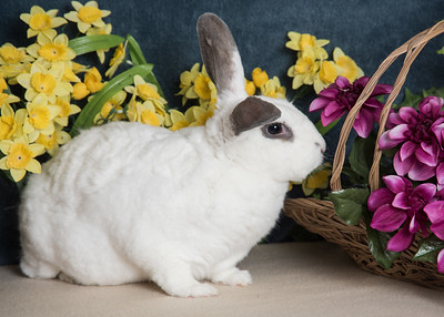 Kesha the Bunny