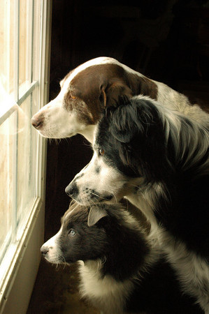 Window Dogs 2