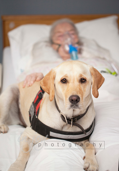 As a therapy dog, Lana visits her grandmother's hospital and helps cheer up patients.  Here she is with her grandmother.