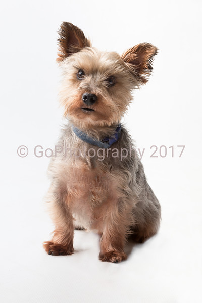 Pets at Home Grantham 2016-19