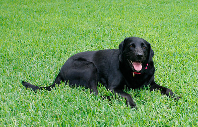 Florida's First Dog Lillee