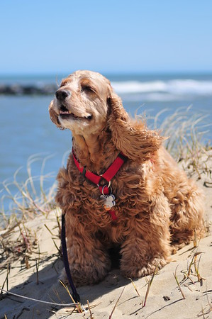 Pets on the Beach April 17 2016