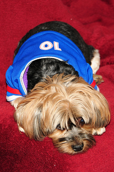 20120108_Daisy_003_out