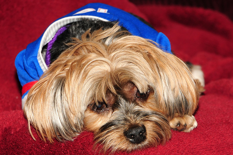 20120108_Daisy_005_out