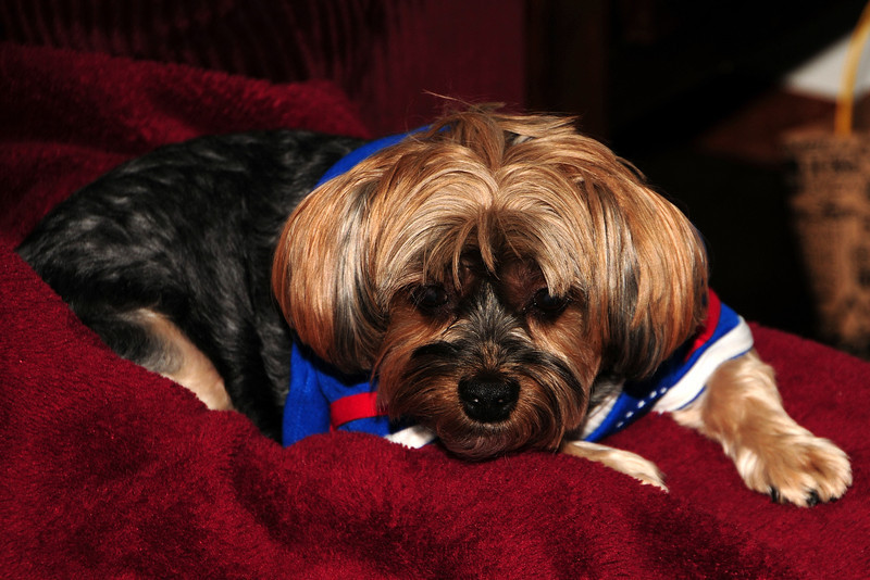 20120108_Daisy_002_out