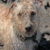 020315-DogBeachDelMar-010