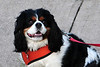 20120615_Charlie_001_out