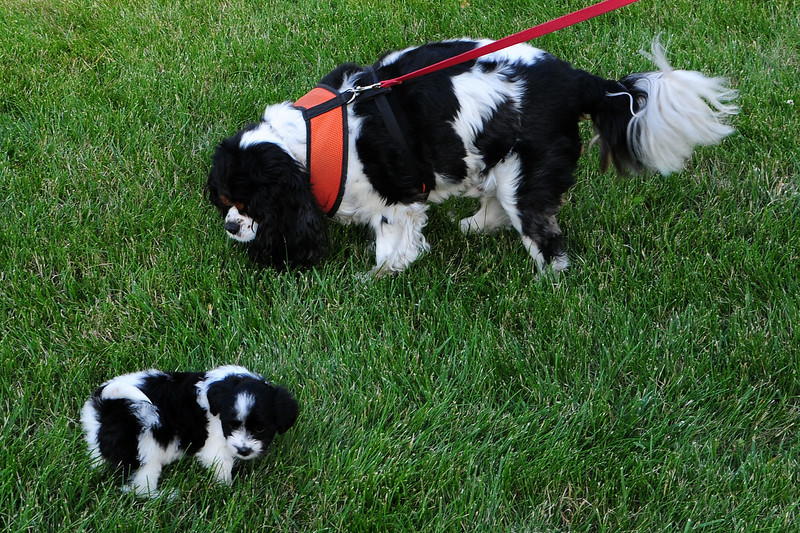 20120615_Charlie_020_out