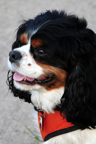 20120615_Charlie_002_out