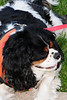 20120615_Charlie_010_out