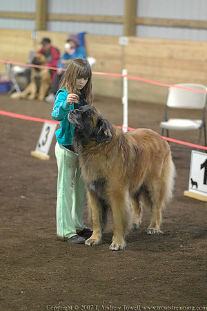 """Snapshot gallery of images from Sunday at the Leonberger Club of the northwest Shamrock Shindig Spring Specialty Show at Argus Ranch  <a href=""""http://www.nwleos.com"""">http://www.nwleos.com</a>  . Images were acquired as RAW files from a Canon 1D and 20D and have been been batch processed and downsized to 1024 pixels for display on the web. The Argus Ranch indoor facility is dark with mixed natural and artificial light, so there is noise and color casts in many of these images. Images Copyright © 2007 J. Andrew Towell All Rights Reserved. Please contact the copyright holder at troutstreaming@gmail.com to discuss any and all usage rights."""