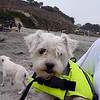 Snow suited up with her PFD, ready to surf!