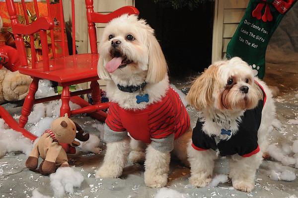 1 Canine Affinity Christmas Photo Shoot