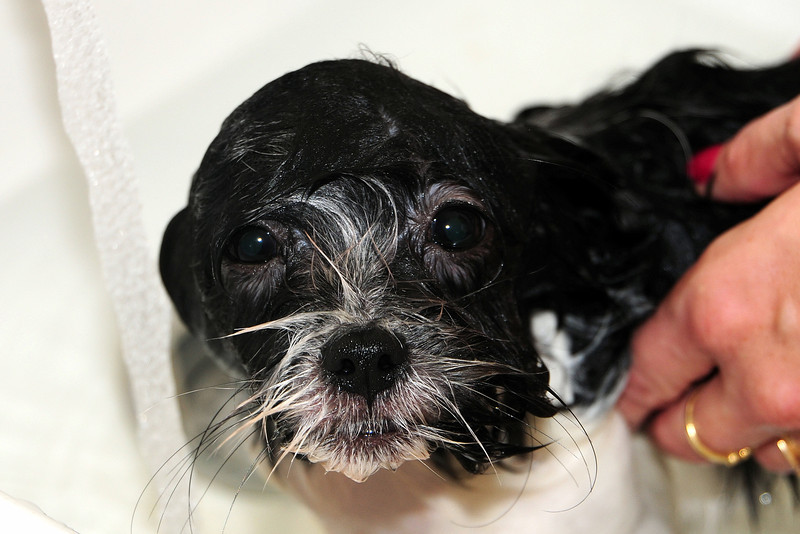 20121021_Maggie_Molly_Oreo_001_out