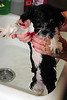 20121021_Maggie_Molly_Oreo_005_out