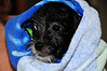 20121021_Maggie_Molly_Oreo_015_out