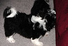 20121021_Maggie_Molly_Oreo_016_out