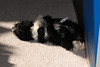 20121021_Maggie_Molly_Oreo_021_out