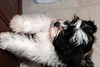 20121021_Maggie_Molly_Oreo_013_out