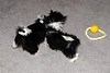20121021_Maggie_Molly_Oreo_019_out