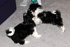 20121021_Maggie_Molly_Oreo_020_out