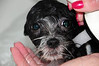 20121021_Maggie_Molly_Oreo_003_out