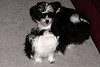 20121021_Maggie_Molly_Oreo_017_out