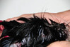 20121021_Maggie_Molly_Oreo_007_out