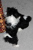 20121021_Maggie_Molly_Oreo_018_out