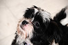 20121021_Maggie_Molly_Oreo_014_out
