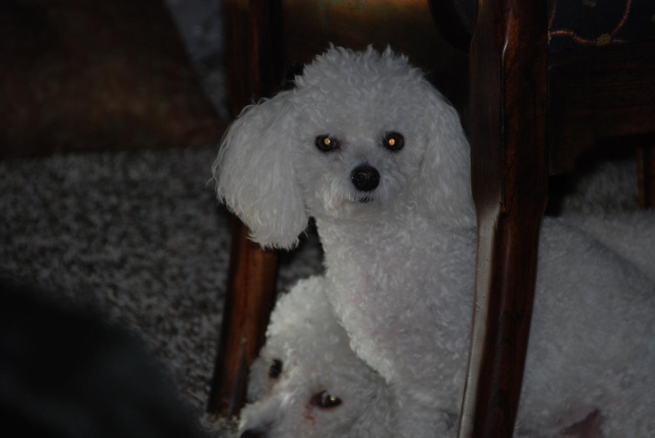 Cassie (Sadie in the background)