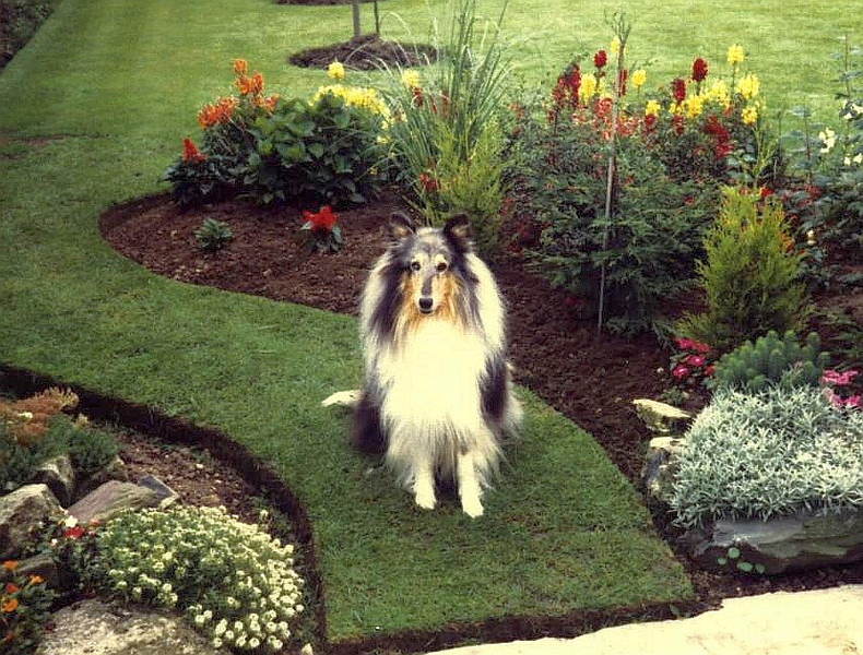"""Bruce was a """"Blue Merle"""" Collie I had when I was a kid."""