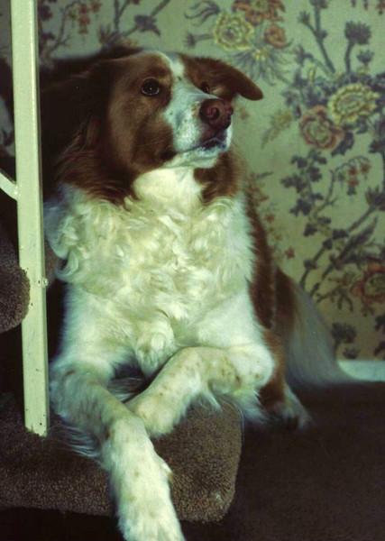 TeeJay, smartest dog I ever knew!