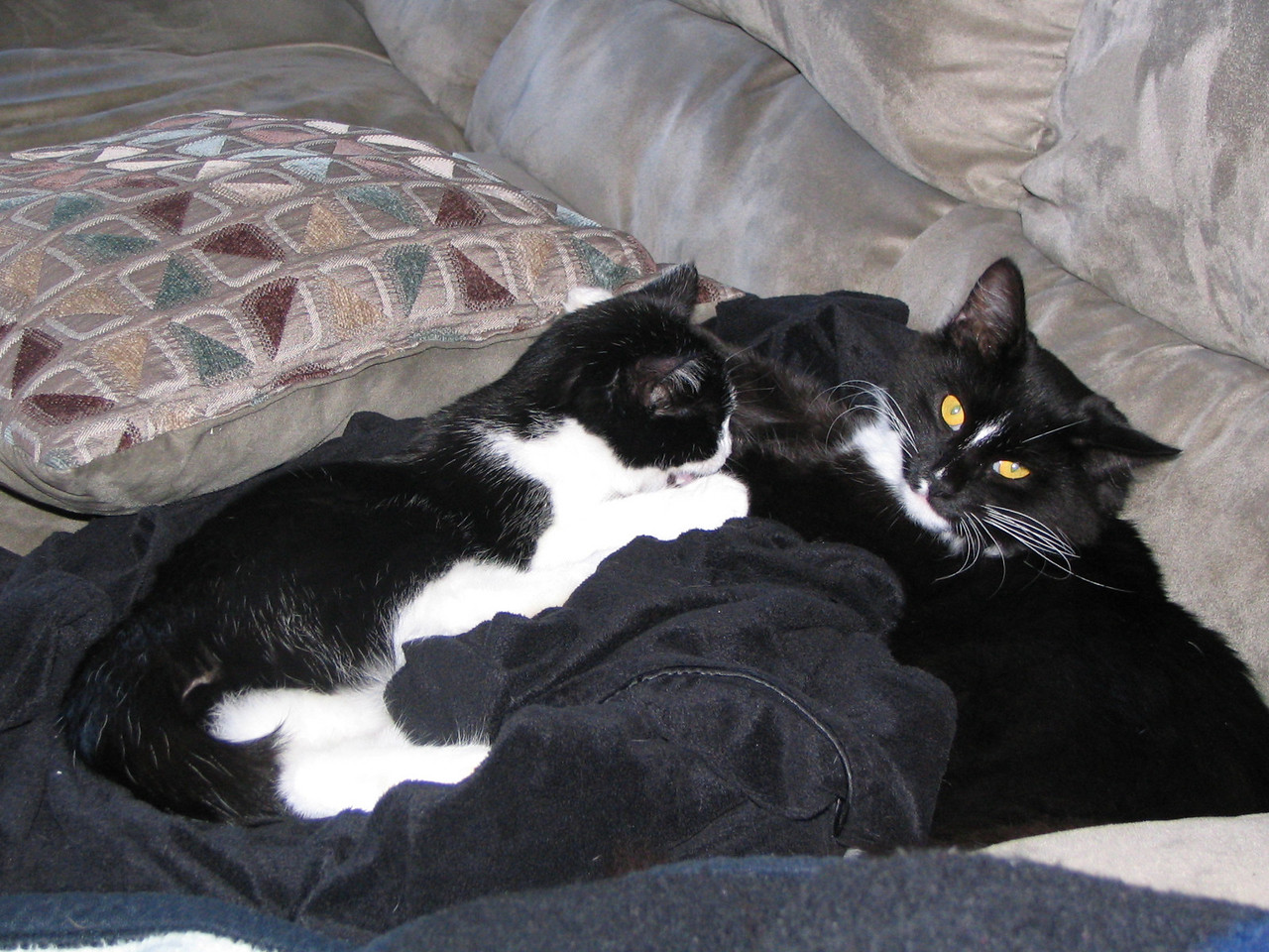 Bella pestering her brother Raider