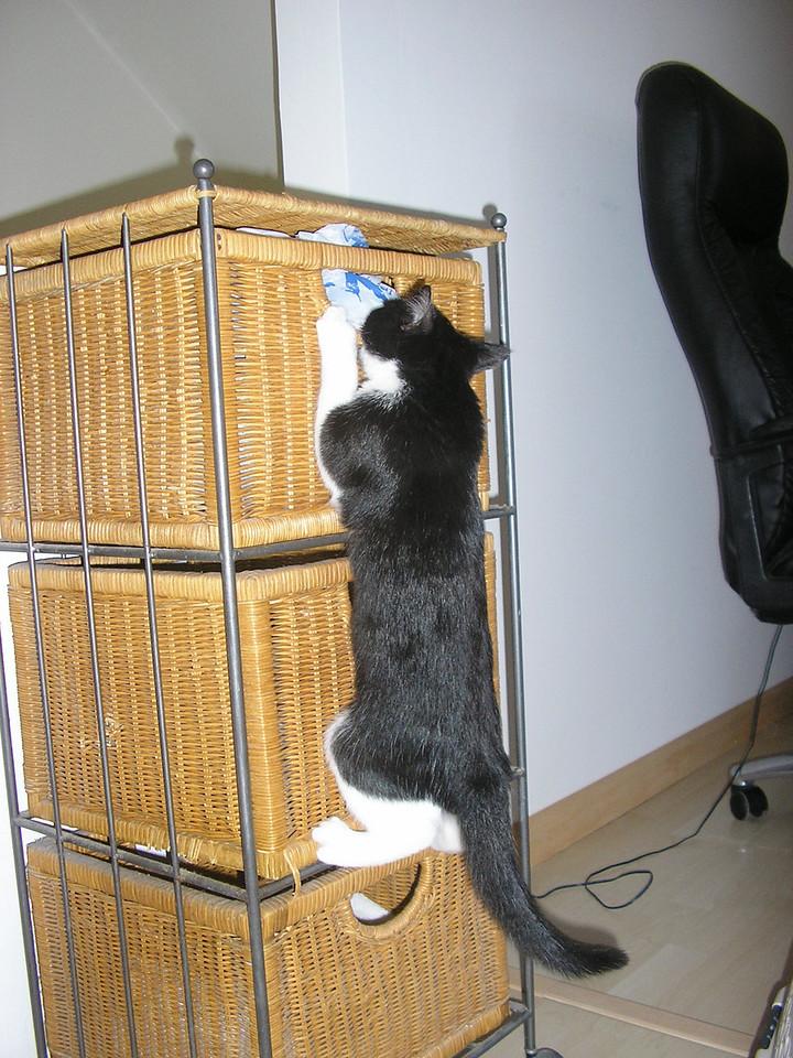 Bella ... adventure kitty!