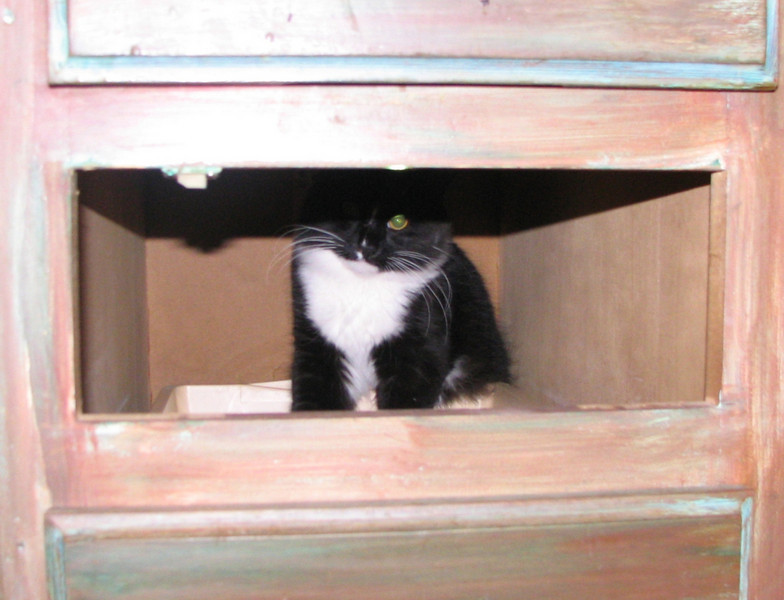 Raider the Cabinet Cat