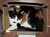 BOX FULL O' CAT