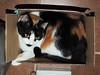 BOX FULL O' CAT